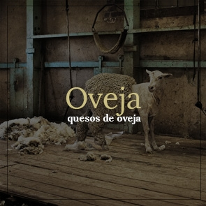 Banner oveja